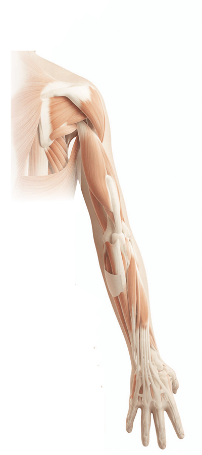 Shoulder and arm pain treatment