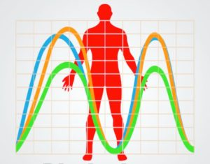 Biorhythm for back pain, Wimbledon Treatment